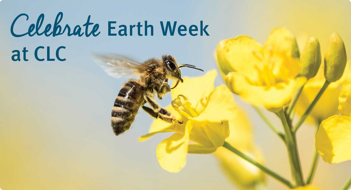 Celebrate Earth Week at CLC (photo of bee on flower)
